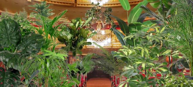 Concert pour plantes, canopée sur canapés à l'Opéra de Barcelone